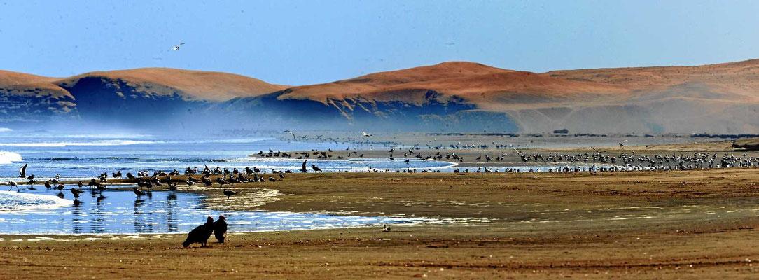 Der Strand ist vermüllt, aber voller Seevögel. So viele haben wir noch nirgendwo auf einem Haufen gesehen,