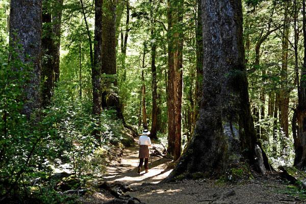 Wir machen eine Wanderung durch einen uralten Märchenwald.