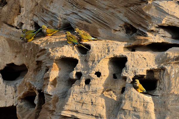 Es sind tausende von Papageien.