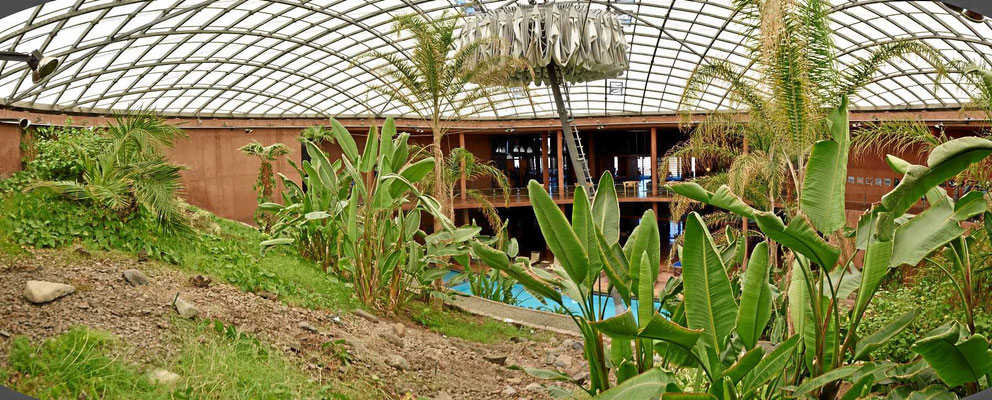 Der tropische Garten des Hotels.