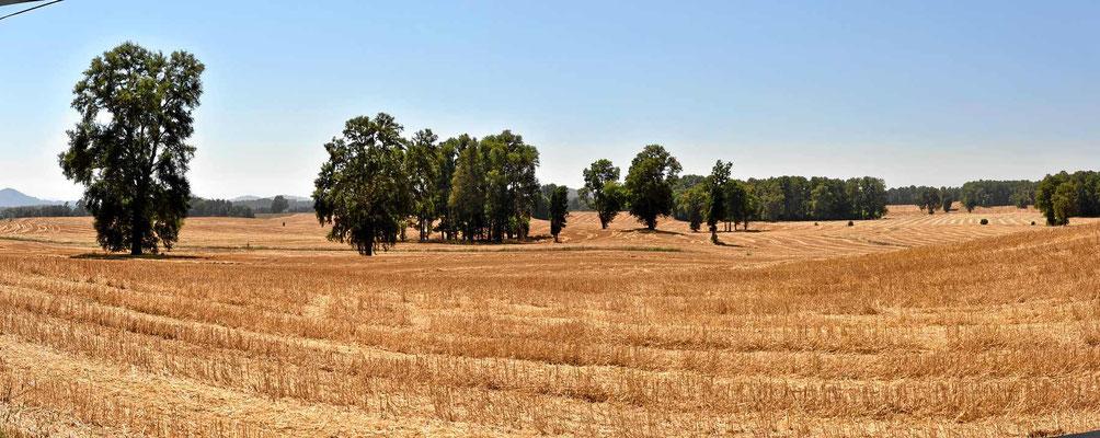 Landschaft, ein bisschen wie in Frankreich. Nur die Felder sind größer.