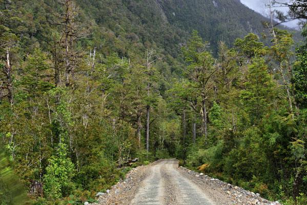 Dafür gibt es schönsten Küstenregenwald am Wegesrand.