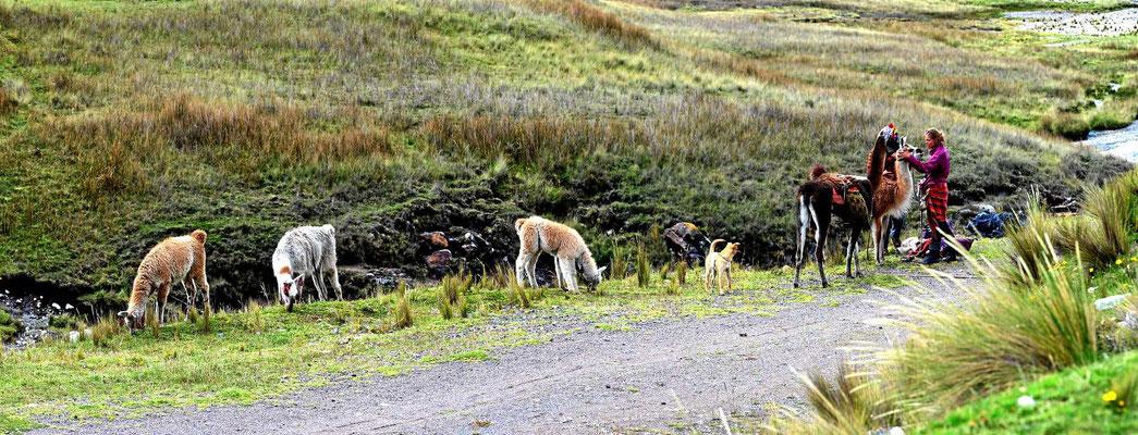 Dabei treffen wir auf ein Tschechisch/peruanisches Paar mit diversen Tieren auf Wanderschaft.