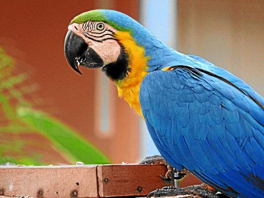 Die Vögel des Pantanal.