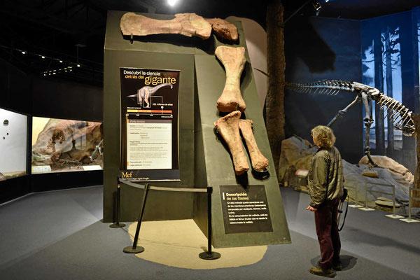 Aus der Größe der Knochen wurde ein Gewicht von 70 to hochgerechnet.