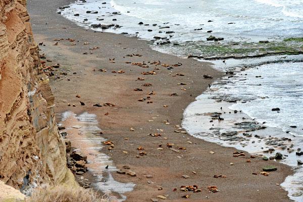 Ein Stück weiter gibt es eine der größten Seelöwenkolonien in Argentinien.