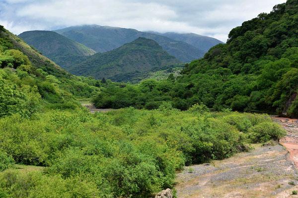 Ich komme in die Yungas-Wälder hinein.