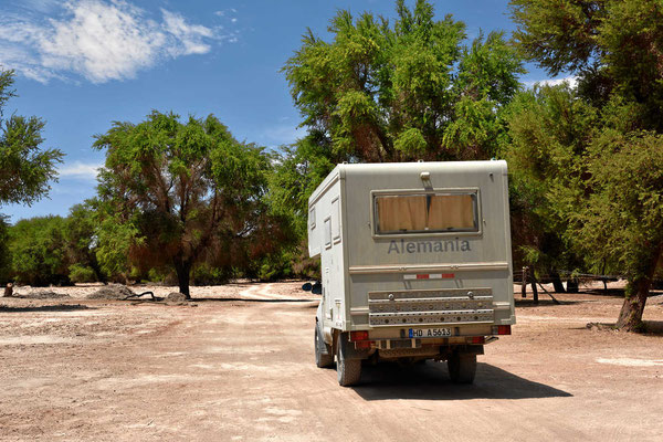 Ein Tamaruga-Wald mitten in der trockensten Wüste der Welt.