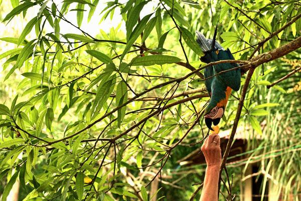 Hier wird Marion's Wunschtraum wahr - füttern von Papageien.