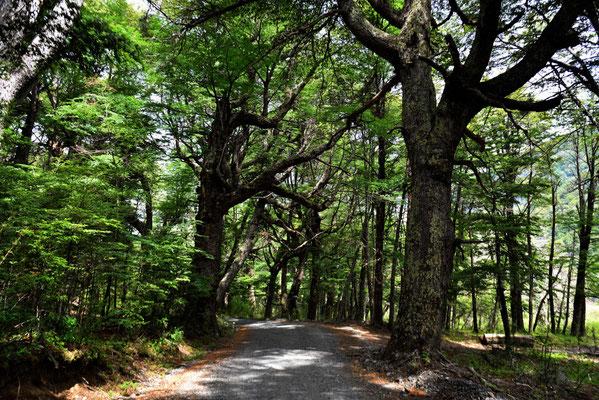 Wunderschöner Wald auf der Rückfahrt.