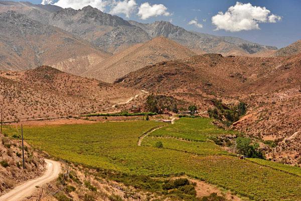 Wenn es Wasser gibt, gibt es auch hier in der Wüste Wein.