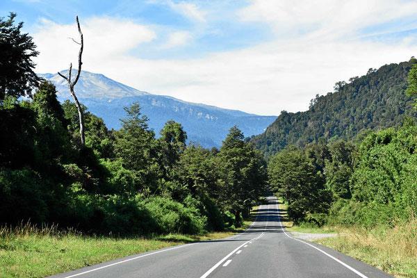 Fahrt durch den Nationalpark Puyehue in Richtung chilenische Grenze.