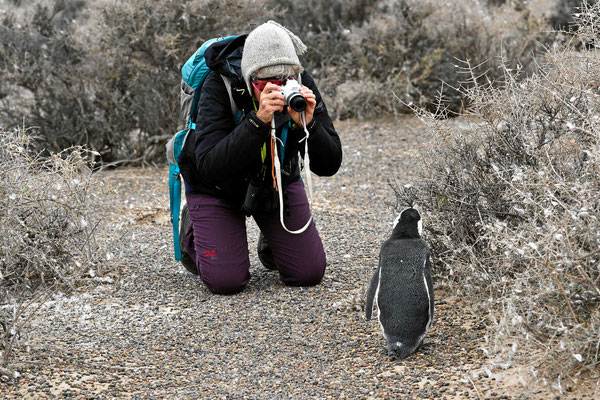 Sie sind absolut zutraulich, man kommt zum Fotografieren beliebig nahe ran.