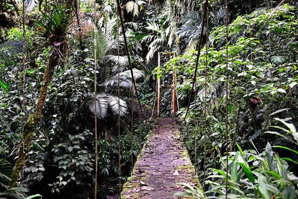 Eine Hängebrücke im Urwald.