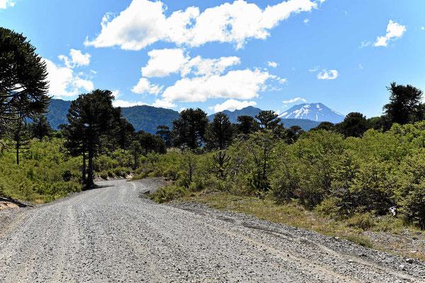 Wunderschöne Landschaft im Park und im Hintergrund immer ein schneebedeckter Vulkan.