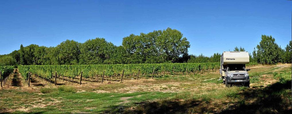 Stellplatz zwischen Weinfeldern