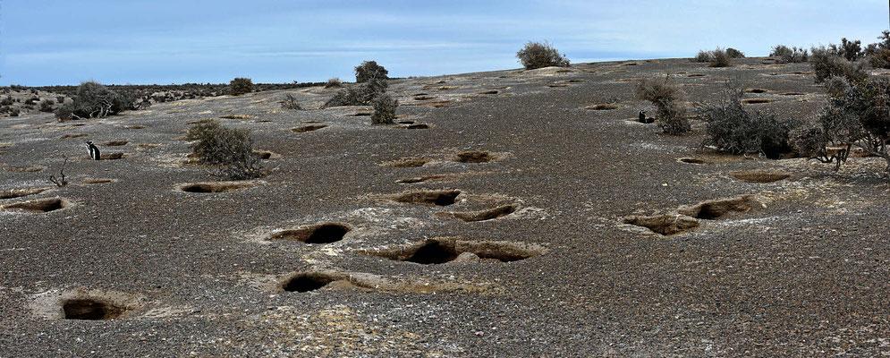 Pinguinhöhlen in Punta Tombo, in der Brutzeit muss hier ein absolutes Gedränge sein.