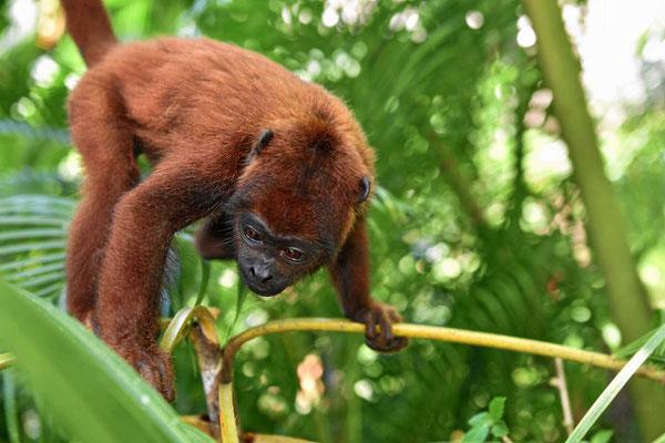 Überall, wo Menschen sind (vor allem am Swimmingpool) taucht unser Affenbabay auf.