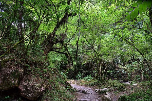 Spaziergang durch die Quebrada de San Lorenzo, ein Tal mit Yungas-Wald.