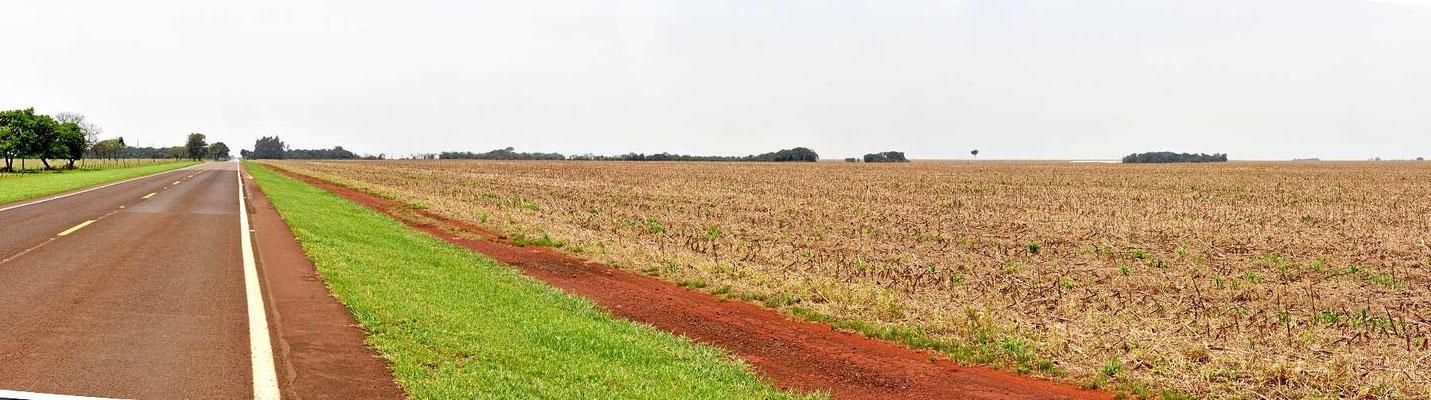Reinste Agrarsteppe auf der Fahrt ins Nordpantanal.