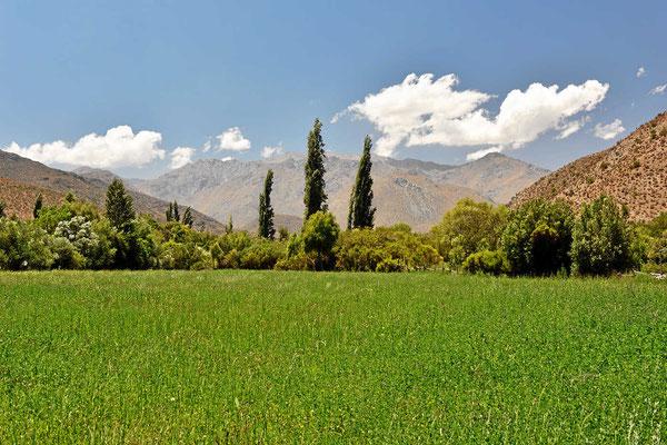Die Hacienda ist 500 ha groß, die meiste Fläche besteht aber aus Wüste, nur wengeg Felder sorgen für Futter für die Pferde.