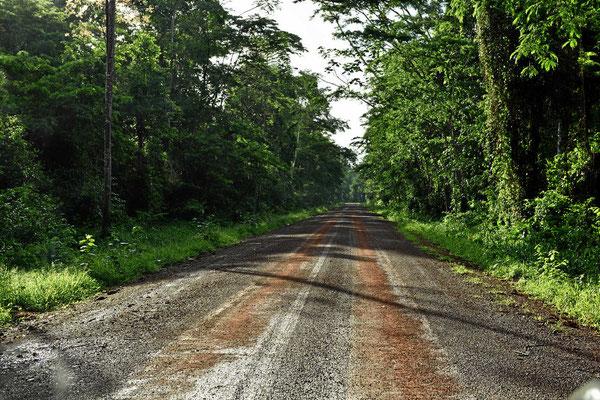 Urwaldfahrt auf einer noch halbwegs trockenen Piste.