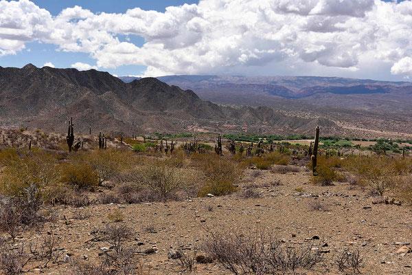 Das Valles Calchaquies ist insgesamt 300 km lang.