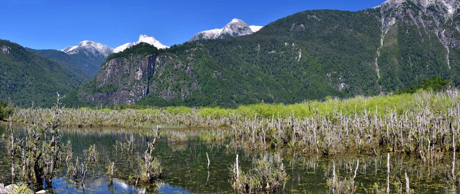 Abgestorbene Wälder am Rio Futaleufu.