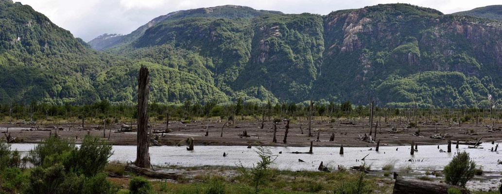 """""""Vulkanschaden"""" an den Wäldern beim Fluss."""