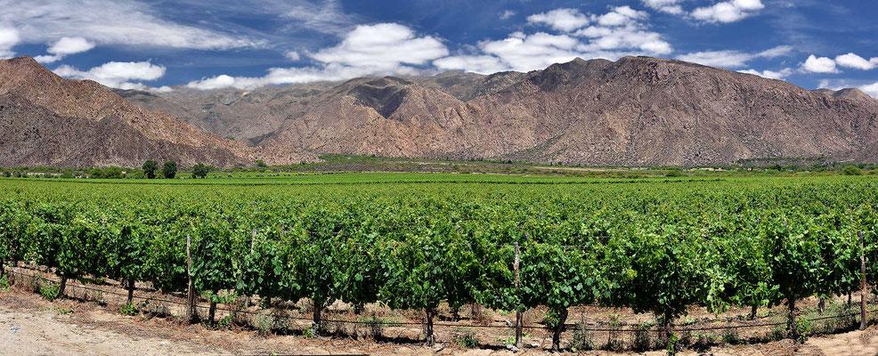 Cafayate ist das zweitgrößte Weinanbaugebiet von Argentinien.