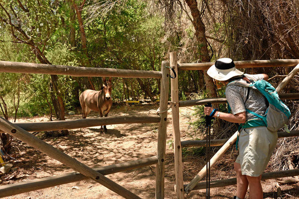 Am Ende grüßen uns die Pferde der Hacienda.