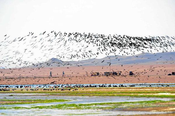 Hier muss es unendlich viel Fisch im Wasser geben - bei sovielen Vögeln.