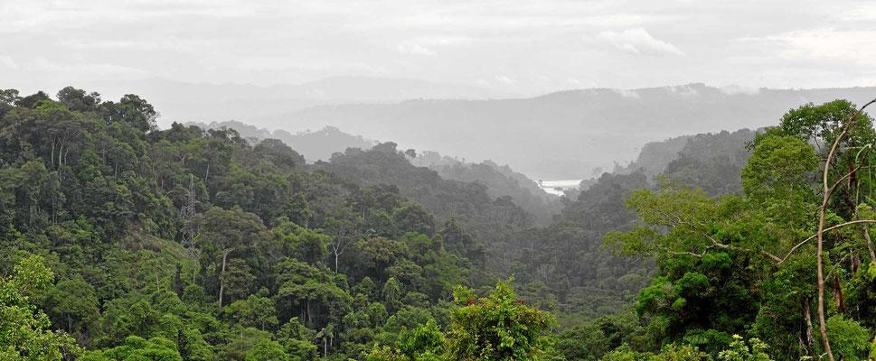 Auf den Weg in die Anden wird es noch einmal wunderschön, fast unberührte Urwälder.