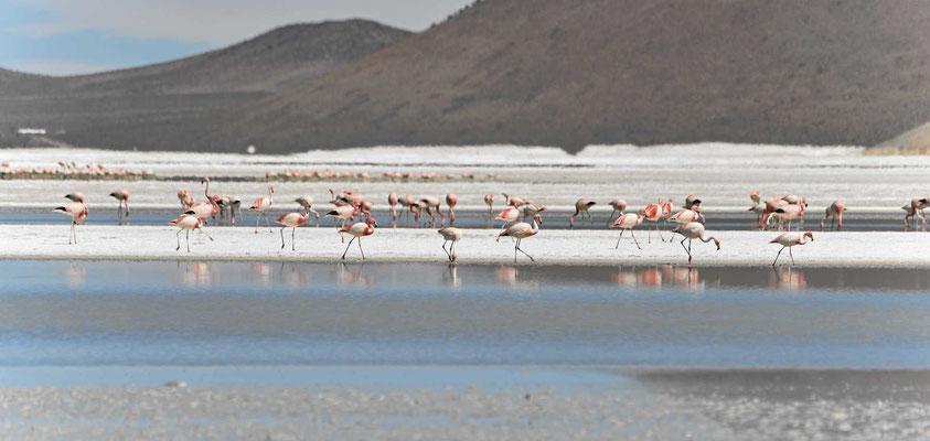 Eine Nahaufnahme der Flamingos.
