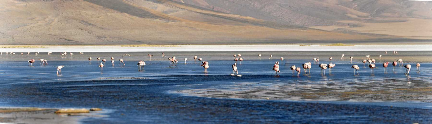 Hunderte von Flamingos im Salzsee.