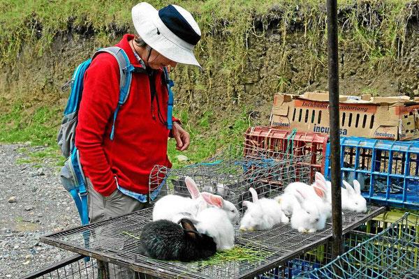 arion auf dem Kleintiermarkt. Hier gibts Kaninchen.