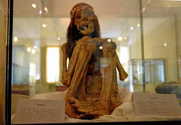 """Im Museum von Pisco kann u.a. diese Mumie bewundert"""" werdwn."""