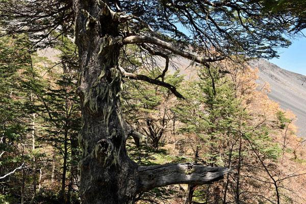 Wir bewundern die unberührten Wälder in den Parks.