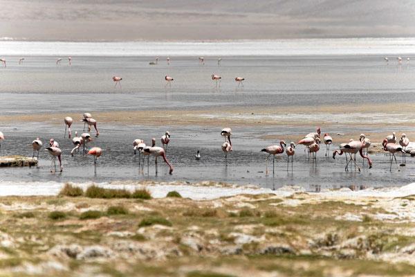 Und wieder Flamingos, die Vögel in dieser Landschaft begeistern uns.