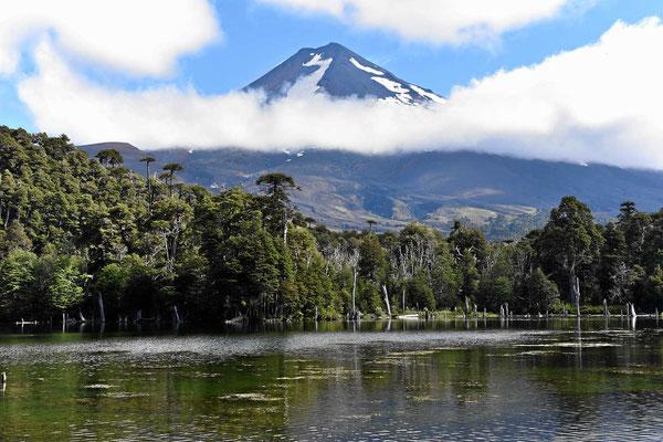 Die Laguna Captren und der Vulkan.