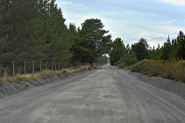 Wir fahren durch endlose Kiefernplantagen. Alles ist eingezäunt, man kann weder rechts noch links weg von der Straße,