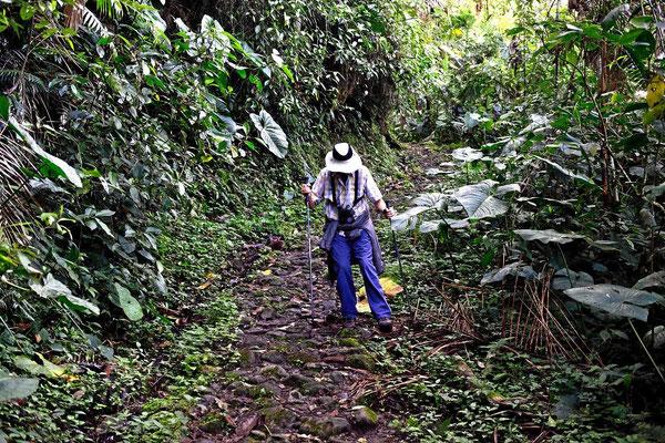 Auf der Jagd nach dem Felsenhahn, wir laufen hinab zum Wasserfall, da er dort oft sichtbar sein soll.