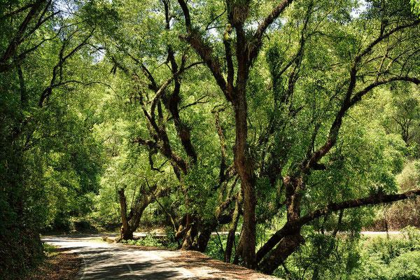 50 km kurvige Strecke durch ein Märchenwald.
