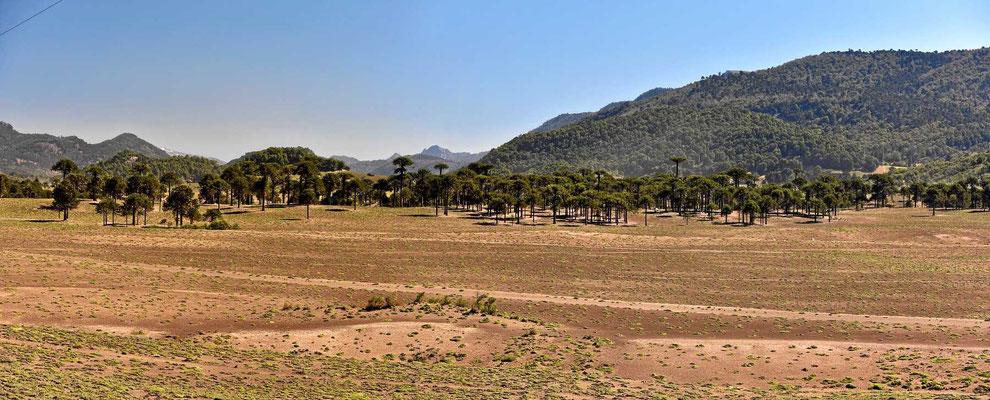 Das hier ist Maputeland.