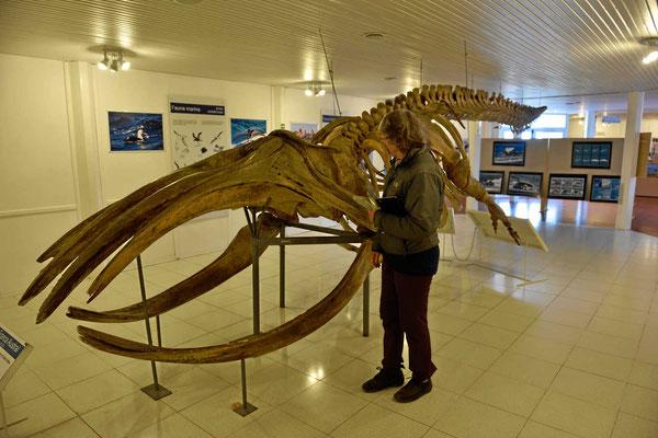 Ein Walsklett im Visitorcenter der Halbinsel Valdez.