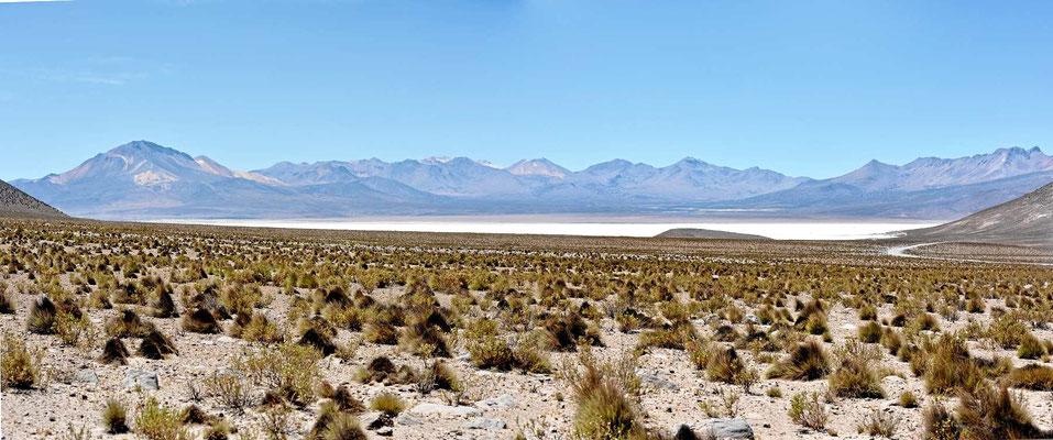 Der Salzsee Salar de Surire schimmert am Horizont.
