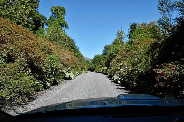 Fuchsien begrenzen unseren Weg durch den Nationalpark.