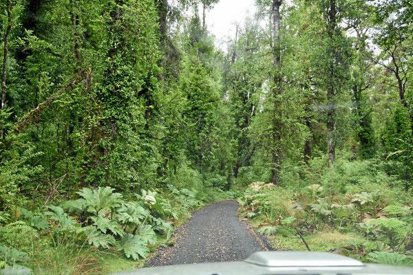 Es geht nochmal auf schmaler Straße durch eine wunderschönen Wald.