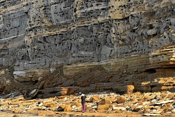 Die Papageien wohnen in Felshöhlen dicht am Meer.