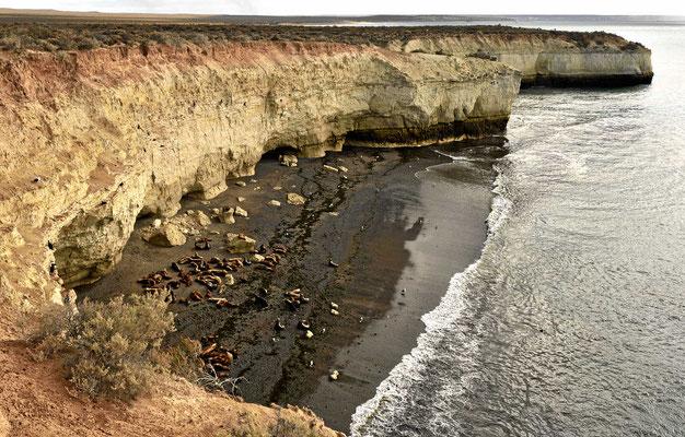 Die Seelöwen von Punta Loma.